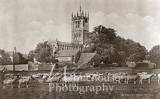 Vintage photo of sheep in The Play Close