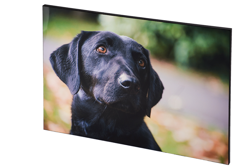 wall block dog in park natural shot photography premium wall art rutland belvoir nottingham
